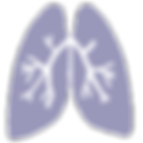 respiratory-system.png