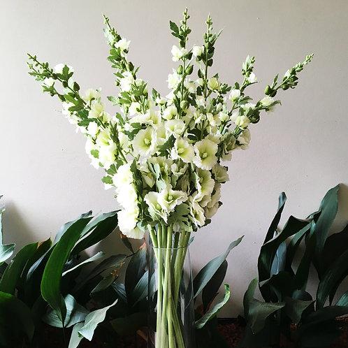 Hollyhock Bouquet - White
