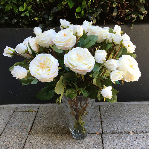 English Rose and Two Buds - White