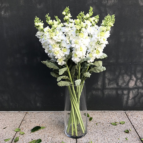 Stock Flower - White
