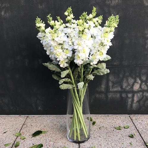 Stock flower white mightylinksfo