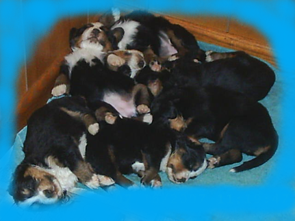 Holly's pups 7-07 (13).png