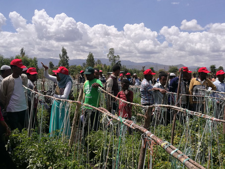 How Israel and Netherlands are teaching Ethiopian farmers to increase their yields -  Hebrew