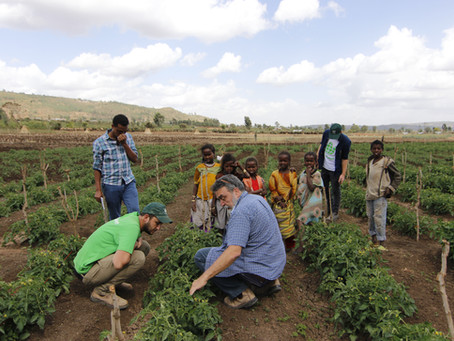 Seeds Of Hope: Israelis Fight Hunger In Ethiopia By Helping Farmers Quintuple Crop Yields