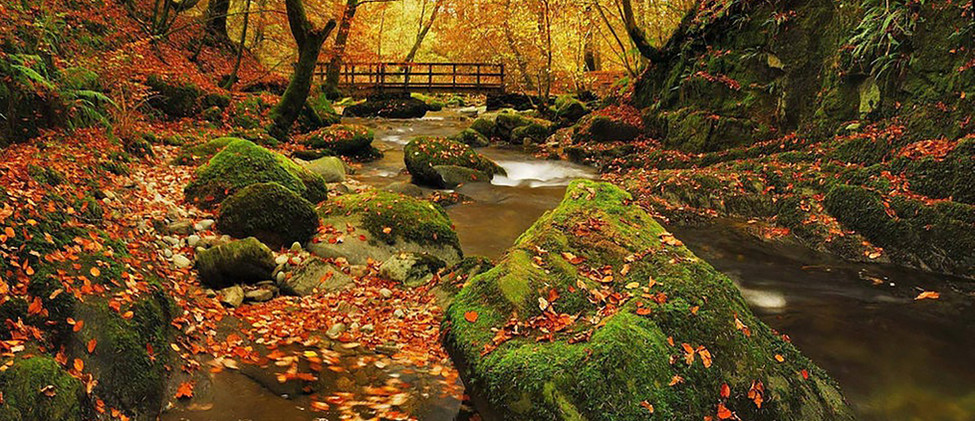 autumnin grizedale.jpg
