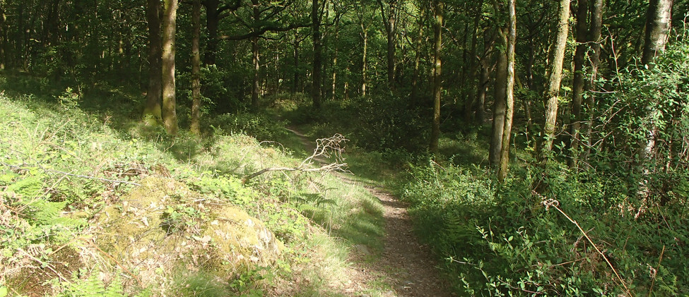 Sunlight in the forest.JPG