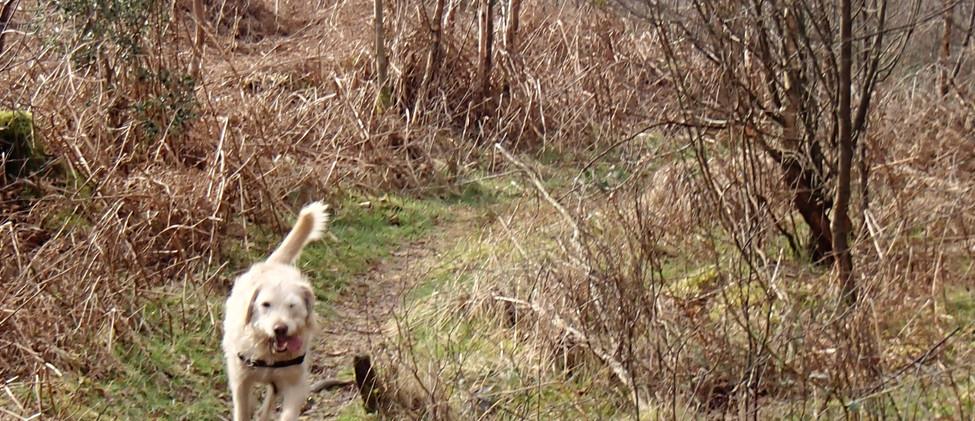 Jonty in the forest.JPG