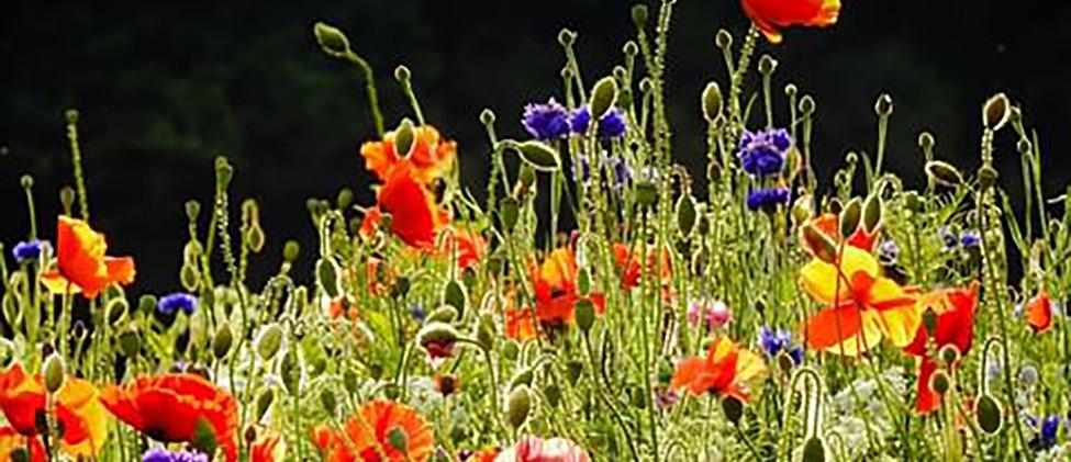 Fellfoot park flowers.jpg