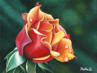 ורד דו-צדדי