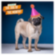 Dog of the Month ads 3.jpg