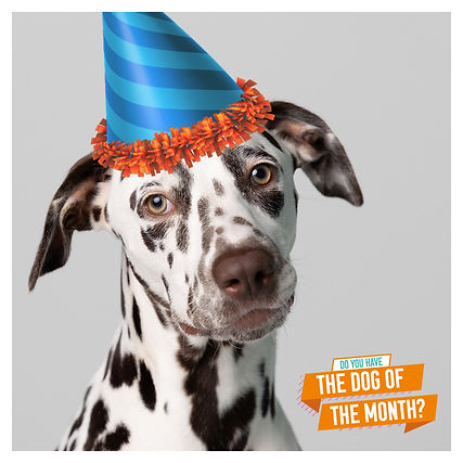 Dog of the Month ads.jpg