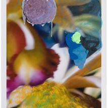 Nature Studies (orb & flower)