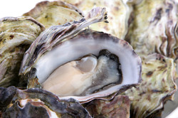 CT & RI Bay Oysters
