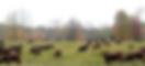 NEFF chaljerie farm Capture.PNG