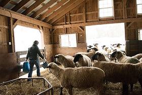 North+Star+Sheep+Farm-108.jpg