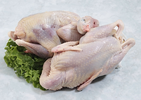 NEFF Chukar Partridge food.png