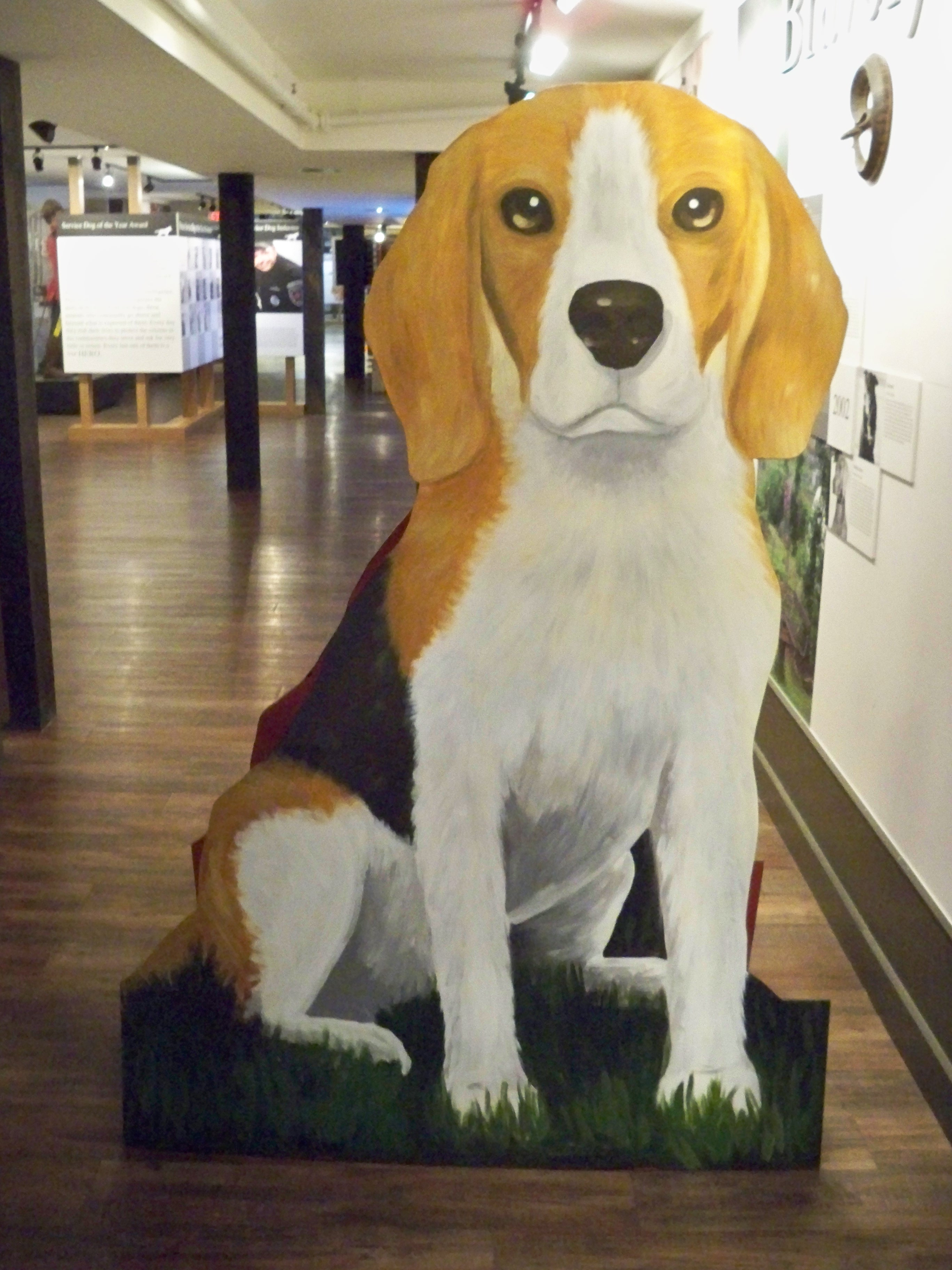 Murals By Marg Big on Beagles Big Bob 2011.jpg