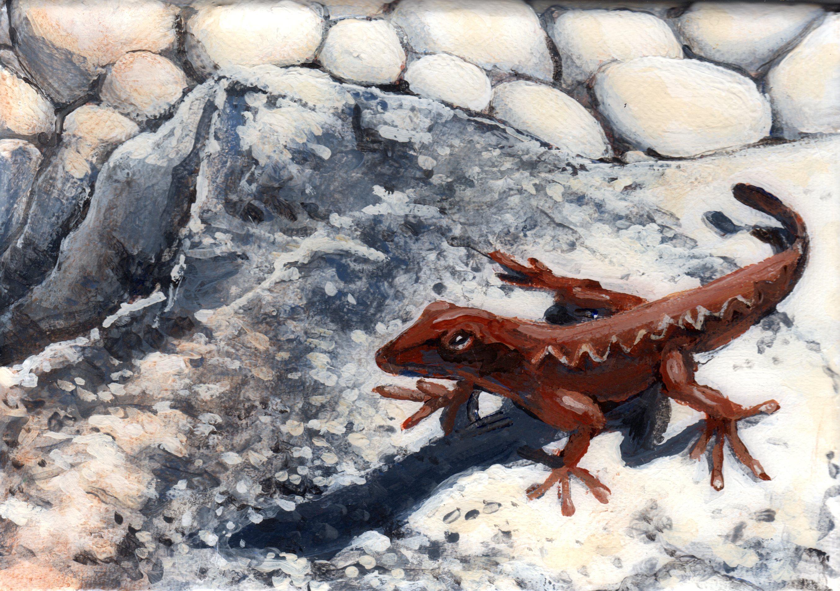 Murals By Marg--gecko.jpg