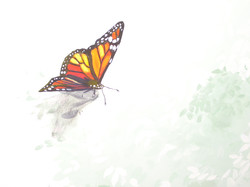 Murals By Marg Monarch Butterfly.jpg