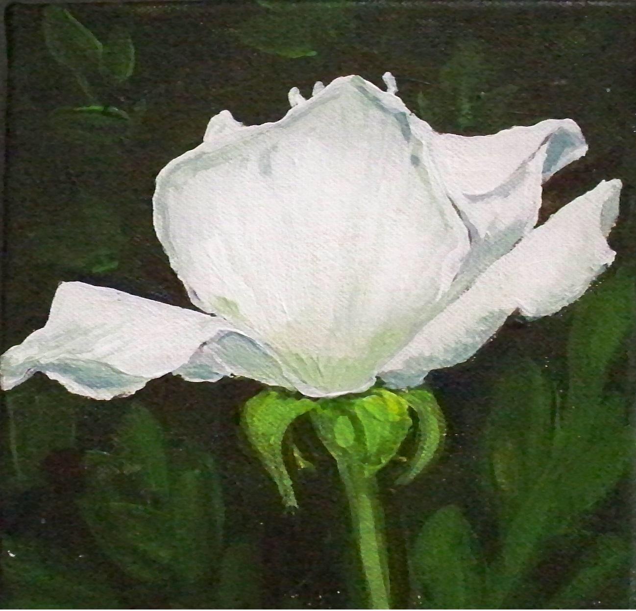 Murals By Marg White Rose.jpg