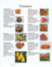 tomatoplants2020.jpg