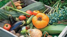 Now taking order for Summer CSA shares (Veggie Baskets)