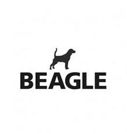 Beagle - Jaraguá do Sul