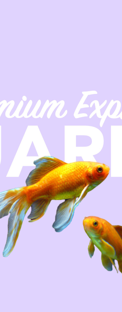 Zierfisch und Aquaristik Service 4xpress.com