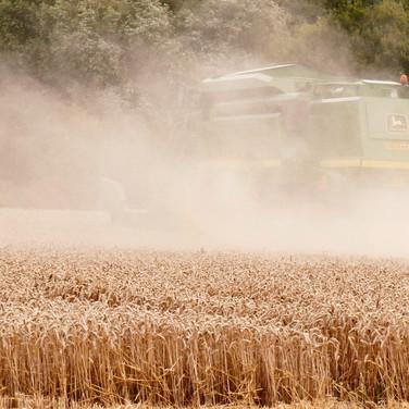 Harvest_11.jpg