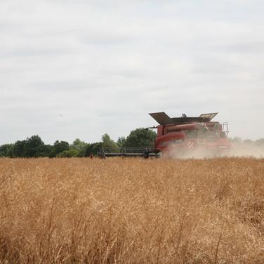Harvest_10.png