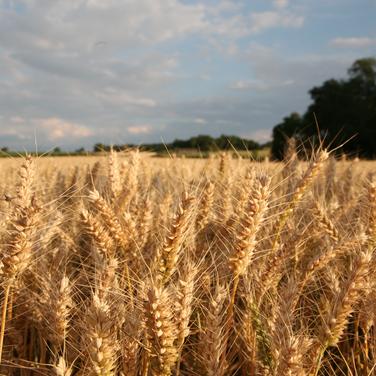 Harvest_7.png