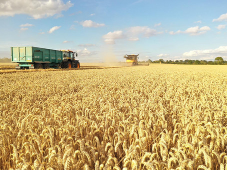 Flexible fungicide approach with RGT Saki