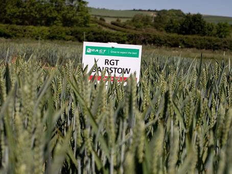 Latest RAGT varieties are set to impress