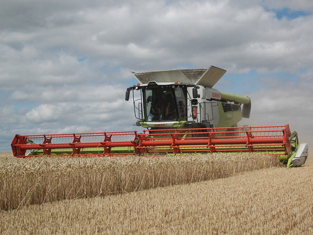 BYDV-resistant wheat RGT Wolverine exceeds expectations in Norfolk