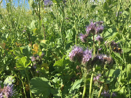 Plan now for soil health crops