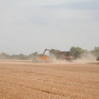 Harvest_9.png