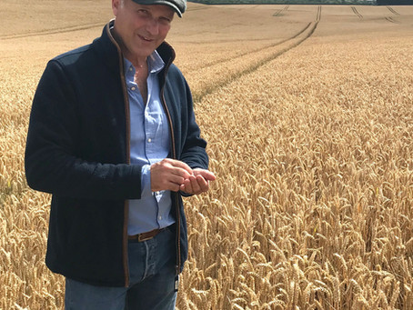 RGT Saki delivers across a range of sowing dates