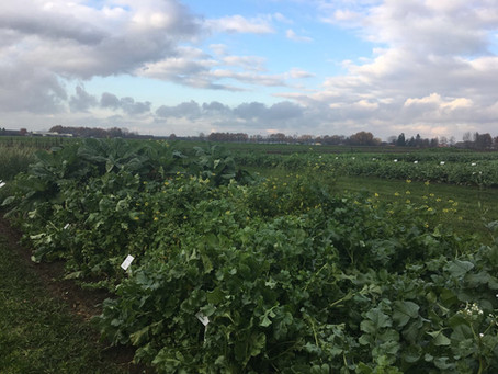 Assessing the need for cover crop solutions