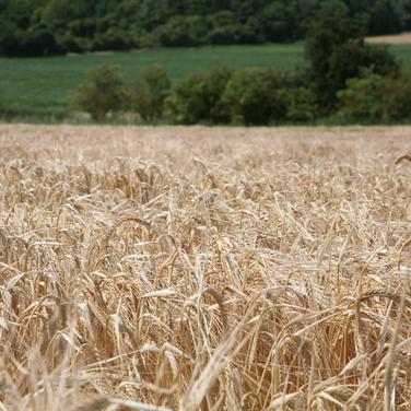 Harvest_1.png