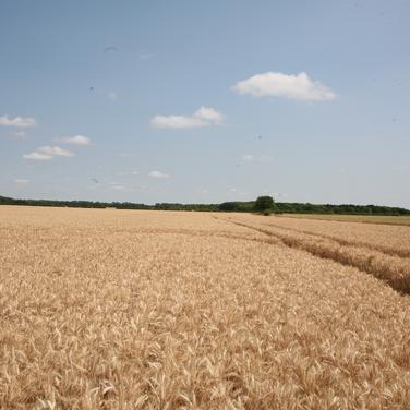 Harvest_5.png