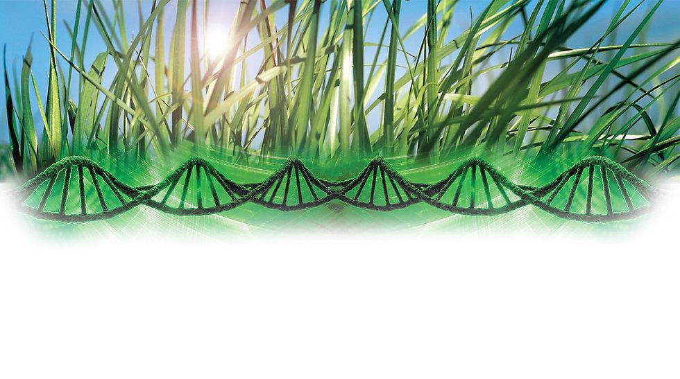 RAGT_PPT_Grass.jpg