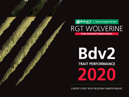 New advice helps growers maximise potential of RGT Wolverine
