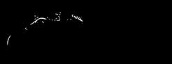 Rainforest-Exotics-Logo-Positive-300x112