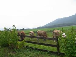 Hiruzen Farm