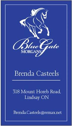 Blue Gate Morgans.jpg