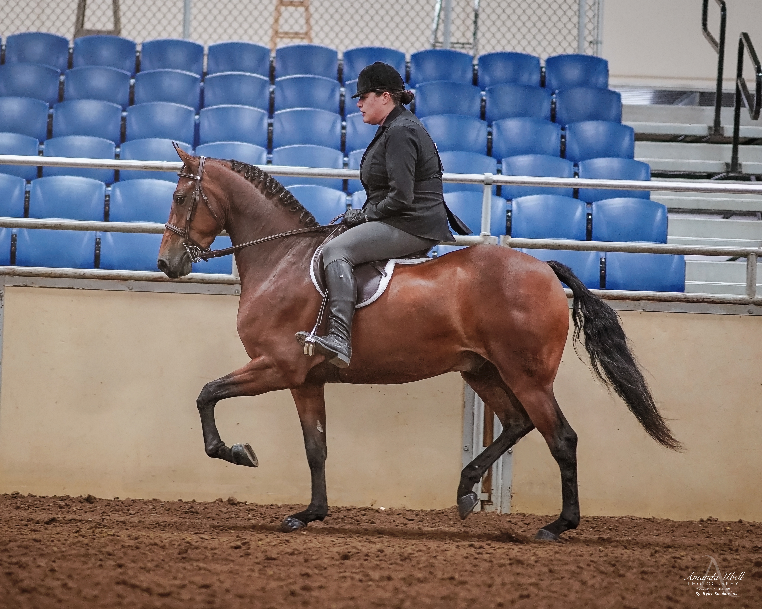 Jeddry_-_2019_Morgan_Horse_Show_-_Sept_0