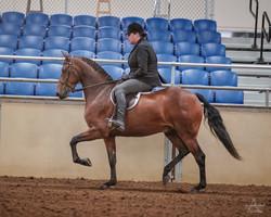 Jeddry_-_2019_Morgan_Horse_Show_-_Sept_0
