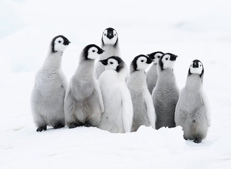 Launch Party for Every Penguin in the World!!