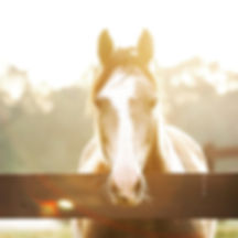 sunny horse.jpg