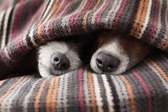 картинки с добрым утром под одеялом линия